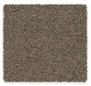 Cut Pile Twist Carpet Godfrey Hirst Devonport Twist
